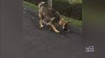 Heroic dog tries to stop 'flood' on street