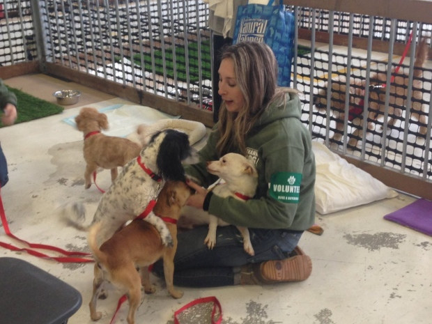 Vancouver Dog Rescue Shelters
