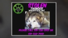 CTV Kitchener: Dog stolen from backyard