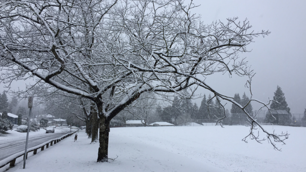 This photo taken by reporter David Molko shows the snowfall in Surrey, B.C., on Dec. 5, 2016. (CTV)