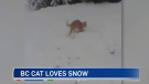 CTV viewer Pamela Auckland captured this video of her cat, Lucky, playing in the snow in Port Simpson, B.C.