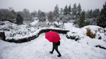 A woman carries an umbrella while walking through Queen Elizabeth Park as snow falls in Vancouver, B.C., on Monday December 5, 2016. Environment Canada has issued a snowfall warning for Metro Vancouver. THE CANADIAN PRESS/Darryl Dyck
