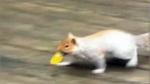 Squirrel 'bulb bandit' caught stealing 150 lights