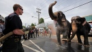 In this May 13, 2009 file photo, Firefighter Eforrest Allmond houses down Asian Elephants from Ringling Bros. and Barnum & Bailey circus in Philadelphia. (AP Photo / Matt Rourke, File)
