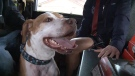 Dying dog, veteran foster dad get fire truck ride