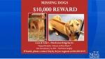 $10k reward for stolen purebred dogs