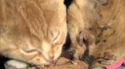 Burned kittens will need a home once healed