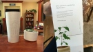 Treeborn.ca's Bios Urn promises to turn loved ones' ashes into a tree after death. Jan. 23, 2017. (CTV Vancouver Island)