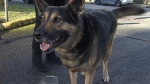 Hero dog alerted family before smoke detector