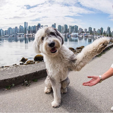 The Dogist' in Vancouver on mission to end animal testing