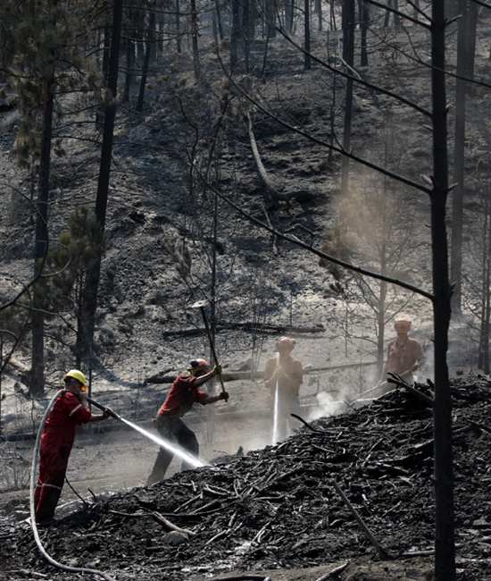 Firefighters put out hotspots in an area burned by a wildfire in Kelowna, B.C., on Monday July 20, 2009. (CP/Darryl Dyck)