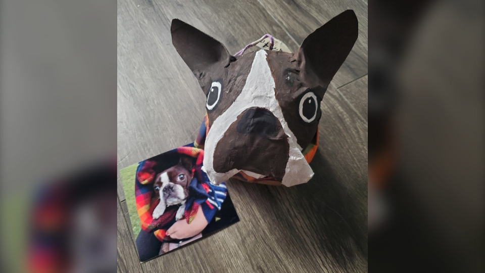 Boston Terrier Pinata Dog