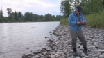 Fisheries biologist Dave Bustard prepared a 100-page report on the potential impact of an oil spill on B.C.'s Morice River. (CTV)