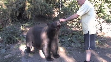 Allen Piche feeds a bear near Christina Lake, B.C., in this personal video image.