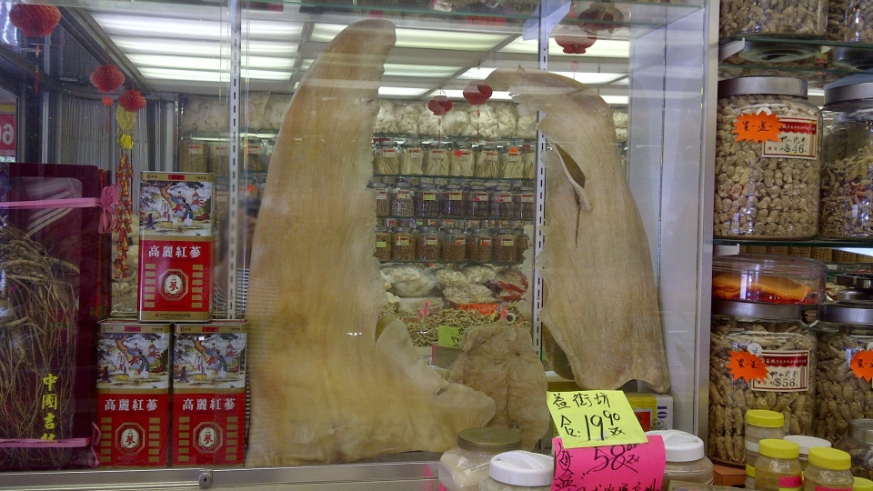 Vancouver City Councillor Kerry Jang is pushing for a ban on shark fin products. Sept. 18. 2012. (CTV)